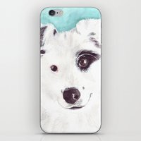 border collie iPhone & iPod Skins featuring Border collie by Art by Frydendal