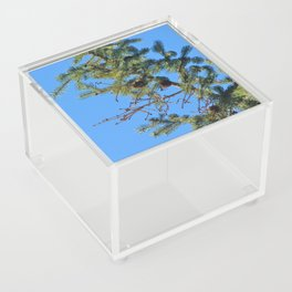 Pining for You  Acrylic Box
