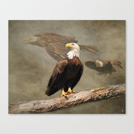 Dreaming of Freedom Bald Eagle Canvas Print
