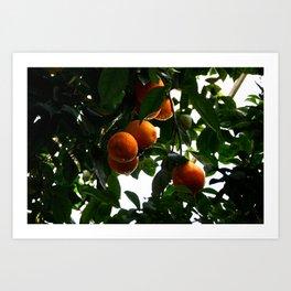 Orange you glad? Art Print