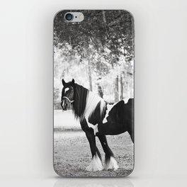 Majestic Horse iPhone Skin