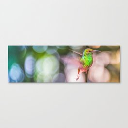 Hummingbird Dream Canvas Print