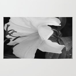 WHITE DHALIA Rug