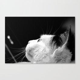 Black & White Cat Canvas Print