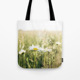 Oxeye Daisy among wild grasses. Norfolk, UK. Tote Bag