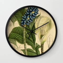 Amorphophallus kerrii/Amorphophallus yunnanensis, Araceae Wall Clock