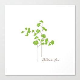 Maidenhair Fern Illustration Botanical Print Canvas Print