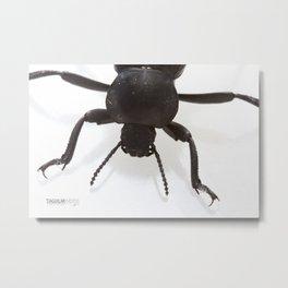 The Ground Beetle Metal Print