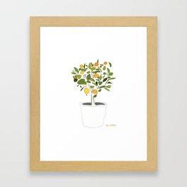 Orange tree in pot Framed Art Print