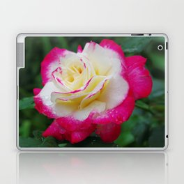 Double Delight Rose - Red and cream beauty Laptop & iPad Skin