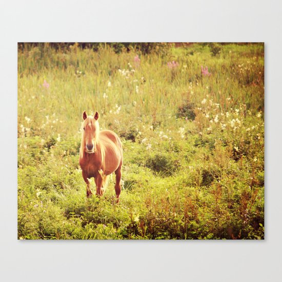 All the Pretty Horses Canvas Print