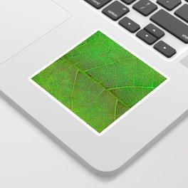Green Leaf With Veins Sticker