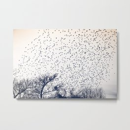 starling murmuration japan Metal Print