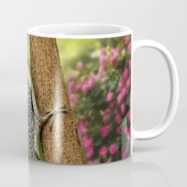 Juvenile Red Bellied Woodpecker Coffee Mug