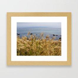 Wild Grasses in front of the Ocean Framed Art Print