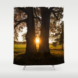 Trees in the evening sun Shower Curtain