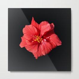 Red Hibicus DPG150523 Metal Print