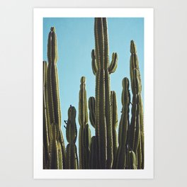 At the Cactus Garden Art Print