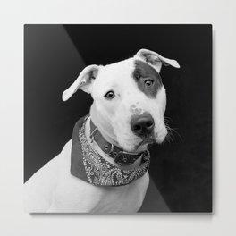 Frankie #2 Metal Print