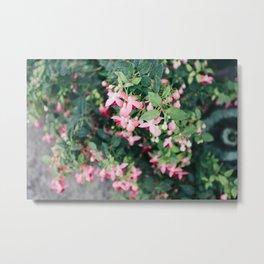 Fuchsia Hybrida Pink Flower Print Metal Print