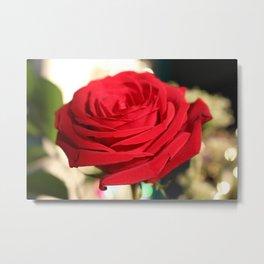 Red Rose Focus Metal Print