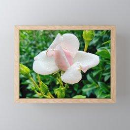 Little Rose Framed Mini Art Print
