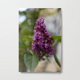 Fresh Purple Lilac Metal Print