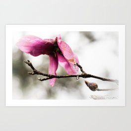 When a flower cryes Art Print