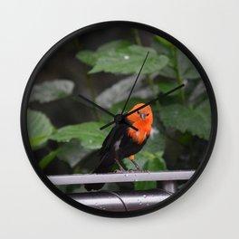 National Aviary - Pittsburgh - Scarlet Headed Blackbird Wall Clock