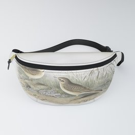 133 Anthus campestris. Tawny Pipit Fanny Pack