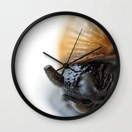 Macro shot of snail hidden in the shell Wall Clock