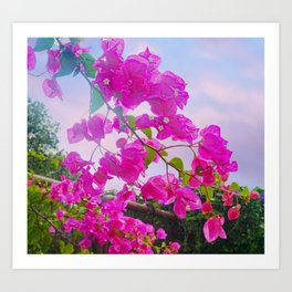 Pink Bougainville Art Print