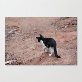 Adventurous Kitty Canvas Print