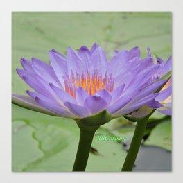 Blue Water Lilies in Hangzhou Canvas Print