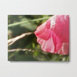 Glistening Pink Metal Print