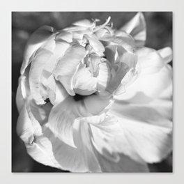 Black & White Tulip Canvas Print