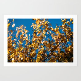 autumn magic Art Print
