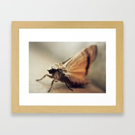 Antiqued Moth - Macro Framed Art Print