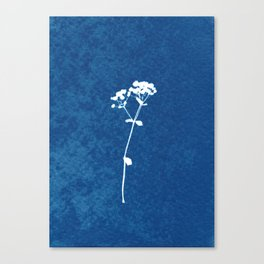Blue botanical wildflower cyanotype print Canvas Print