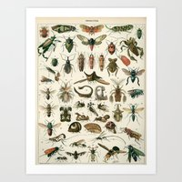 insects Art Prints featuring Insects by Noughton