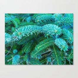Fantastic Blue Spruce Canvas Print