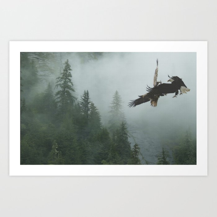 Battle for the Cedars - Bald Eagles Wildlife Scene Art Print