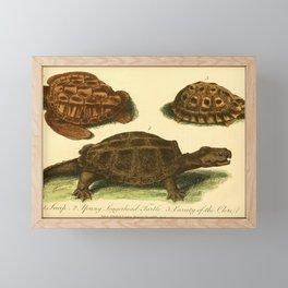Vintage Print - Bullock's London Museum & Pantherion (1812) - Turtles Framed Mini Art Print