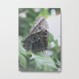 Owl Butterfly on a leaf Metal Print