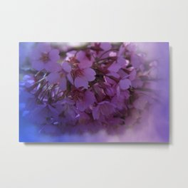Prunus spinosa on texture - the signs of spring Metal Print