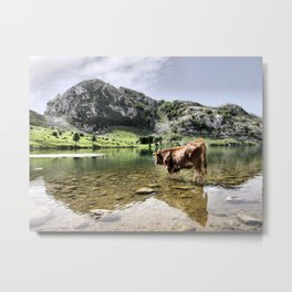 Cows in Lakes of Covadonga, Asturias Metal Print