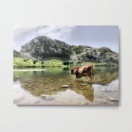Cows in Lakes of Covadonga, Asturias Metal Print