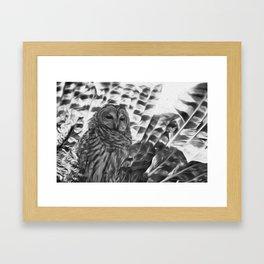 strigiforme Framed Art Print