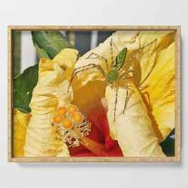 Translucent green spider on the yellow hibiscus Serving Tray