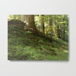 Forest Floor (Nikko, Japan) Metal Print